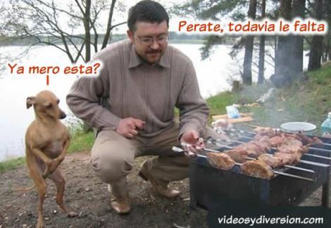 perrito-hambriento